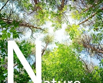 طرح طبیعت سقف کشسان