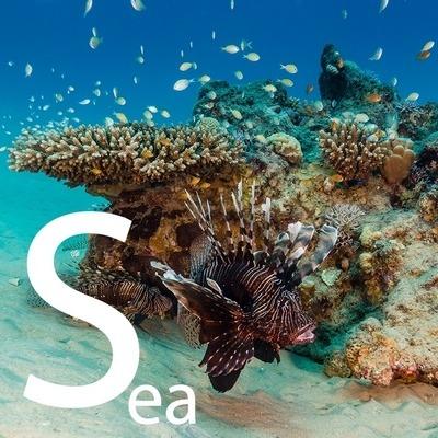 طرح اقیانوس و دریا برای سقف کشسان